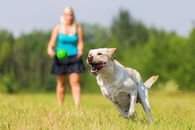 Kvinnan spelar med en hund på ängen royaltyfri bild