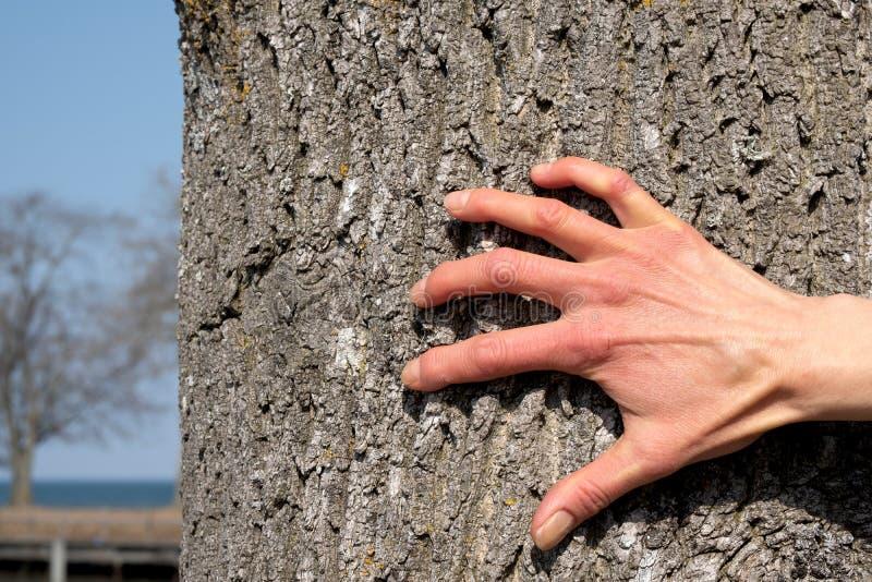 Kvinnans hand skrapar skället arkivfoton