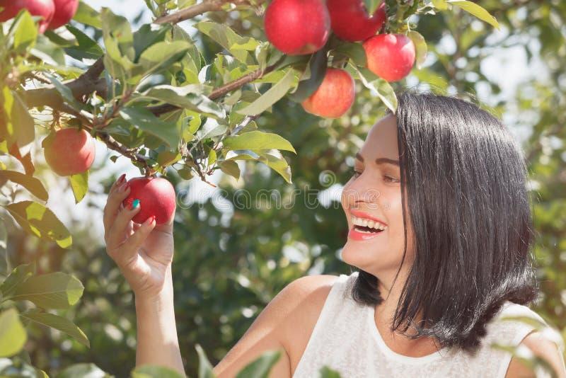 Kvinnaplockningäpplen i äpplefruktträdgården arkivbild