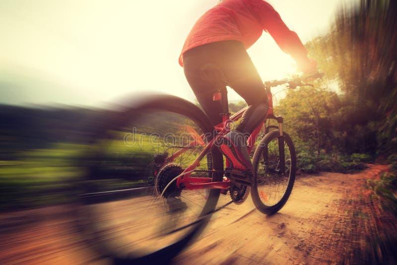 Kvinnaridningmountainbike på skogslinga arkivfoto