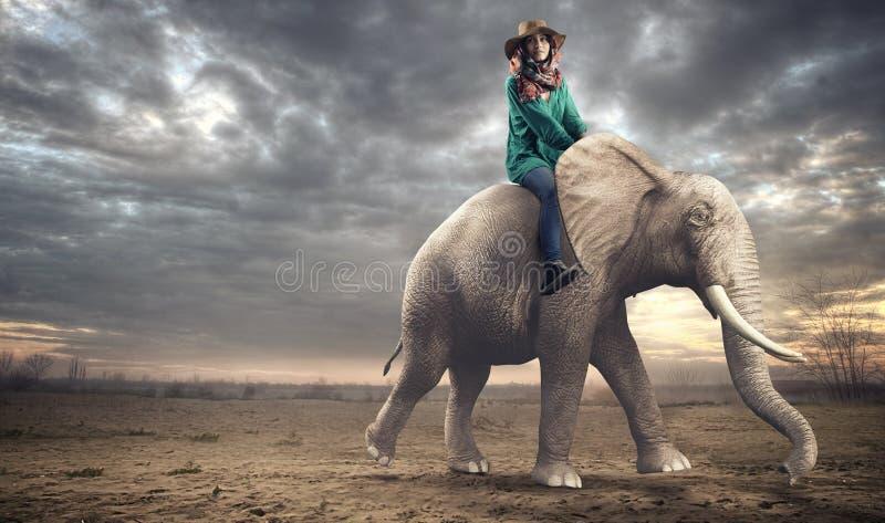 Kvinnasammanträde på en elefant royaltyfria foton