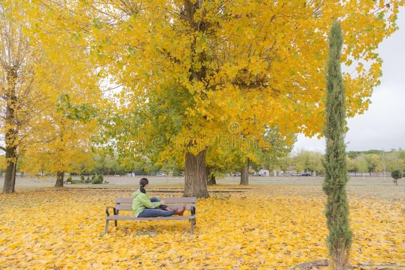 Kvinnasammanträde på en parkerabänk med guling lämnar att falla från träd arkivbilder