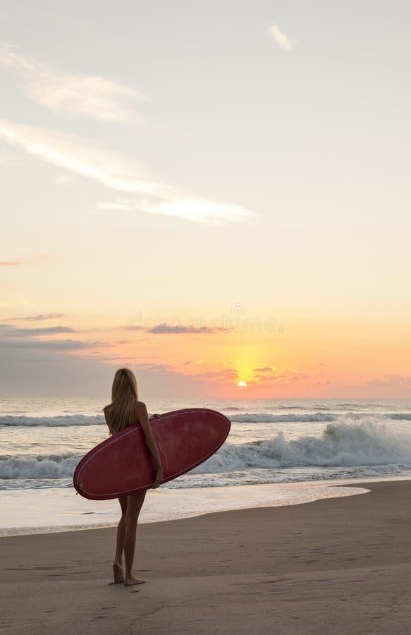 Kvinnasurfareflicka i strand för bikinisurfingbrädasolnedgång royaltyfri fotografi
