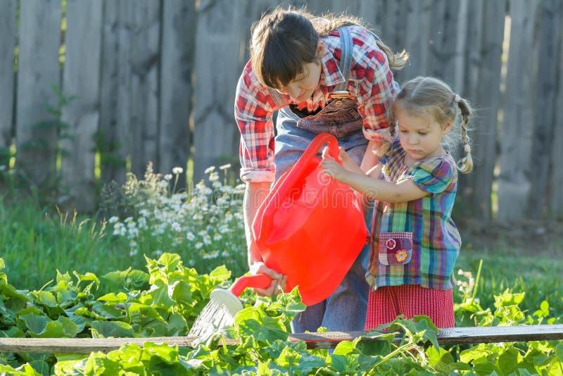 Kvinnaträdgårdsmästare som hjälper hennes dotter att hälla säng för grönsakträdgård med gurkor fotografering för bildbyråer