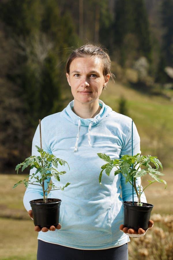 Kvinnaträdgårdsmästare som rymmer hennes tomatplantor förberedda att planteras på hennes trädgård arkivbilder