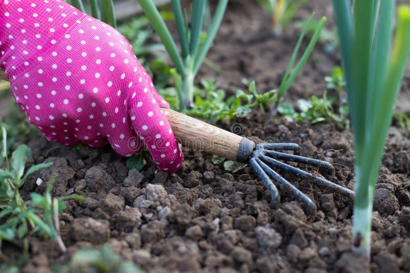 Kvinnaträdgårdsmästare With Tool Hoe som hackar gräs i grönsakträdgård royaltyfria bilder