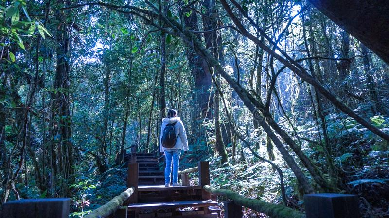 Kvinnaturisten tycker om trekking i frodigt naturskogsolljus royaltyfria foton