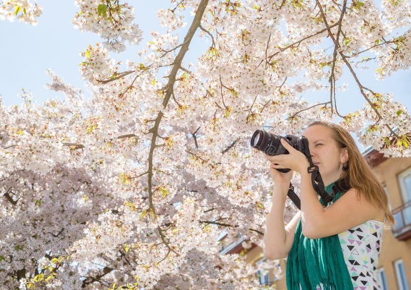 Kvinnaung flickafotograf som tar skottet av blomningen för körsbärsrött träd royaltyfri fotografi