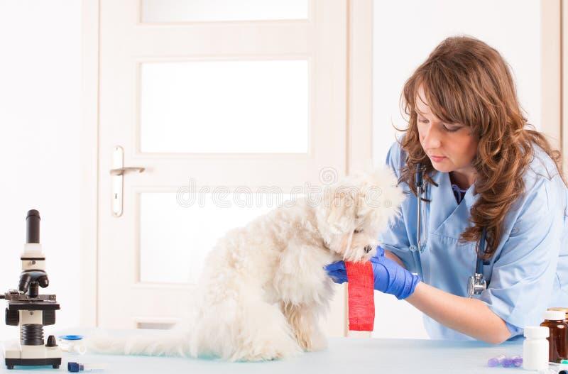 Kvinnaveterinär med en hund royaltyfri foto