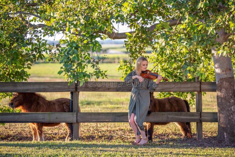 KvinnaviolinistPlaying To Miniature hästar på solnedgången arkivfoton
