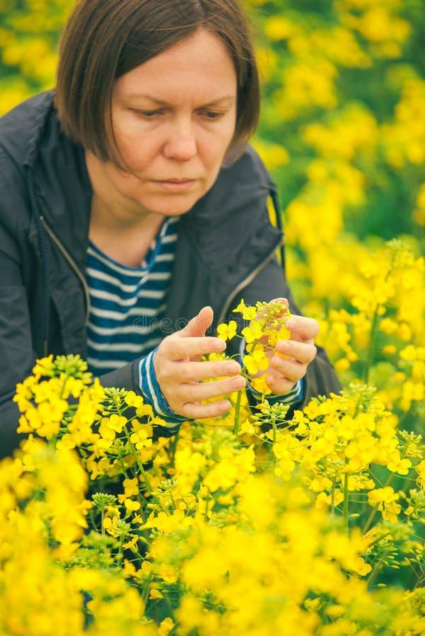 Kvinnlig agronom i fält av den blommande rapsfröt arkivbild