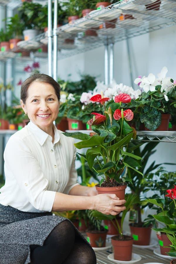 Kvinnlig blomsterhandlare med anthuriumväxten arkivfoton