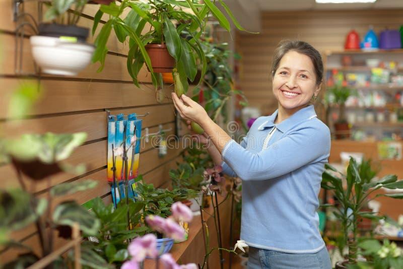 Kvinnlig blomsterhandlare med Nepenthesväxten arkivfoton