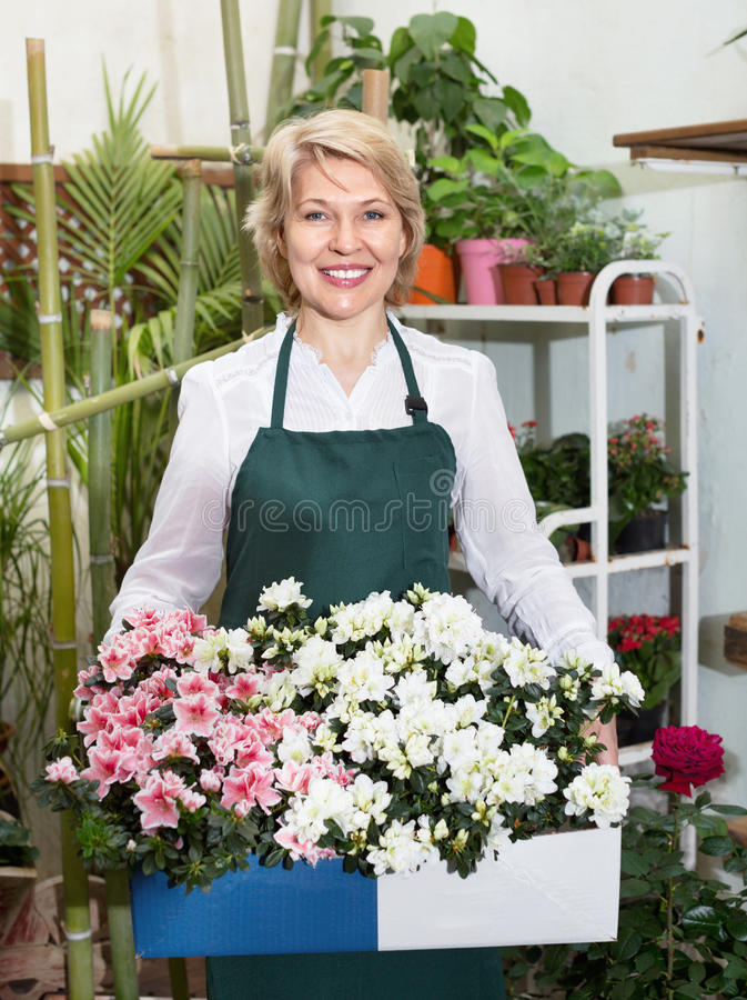Kvinnlig blomsterhandlare som bär ett förkläde och står lyckligt bland flowe arkivfoto