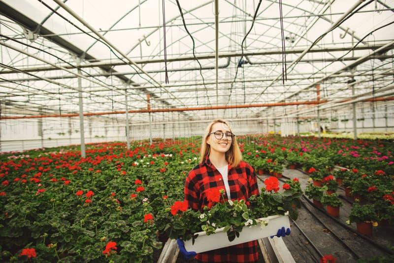 Kvinnlig blomsterhandlareinnehavblomkruka i v?xthus Begrepp av gardering royaltyfria foton