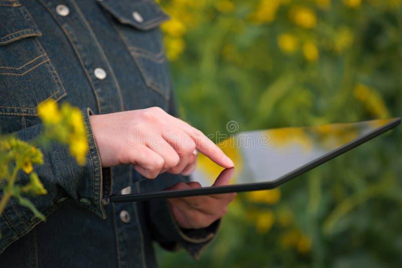 Kvinnlig bonde med den Digital minnestavlan i den odlade oljefrörapsfröt arkivfoton
