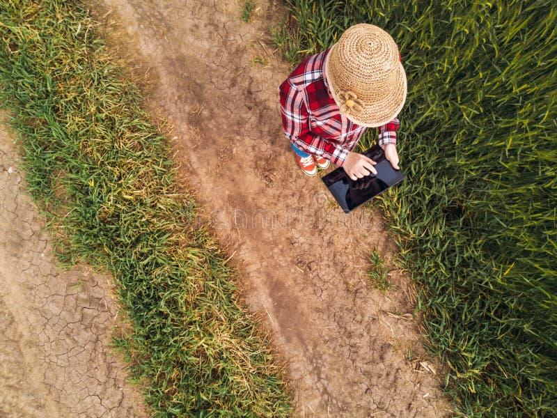 Kvinnlig bonde som använder den digitala minnestavladatoren i grönt vetefält arkivfoto