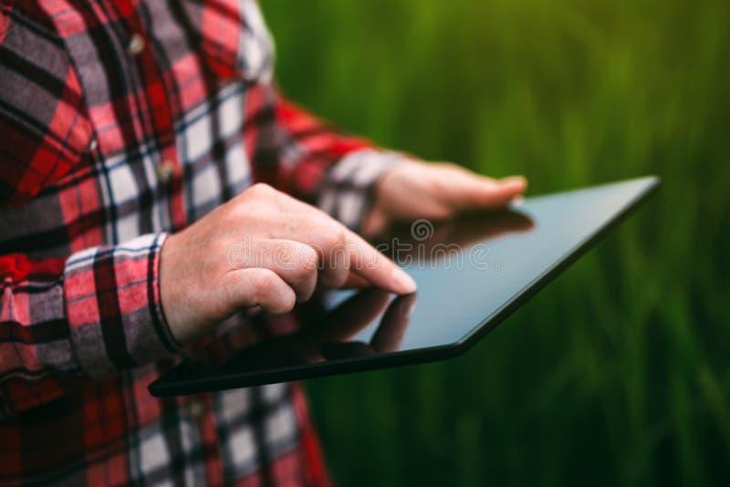 Kvinnlig bonde som använder minnestavladatoren i kornskördfält arkivbilder