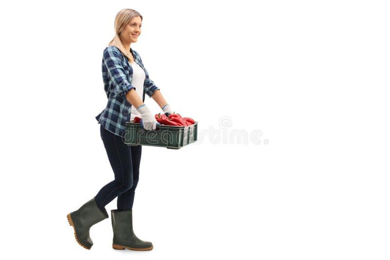 Kvinnlig bonde som mycket bär en spjällåda av röda peppar royaltyfria bilder