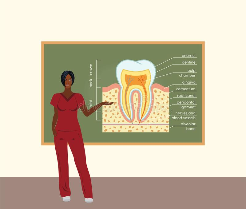 Kvinnlig doktorslärare royaltyfri illustrationer
