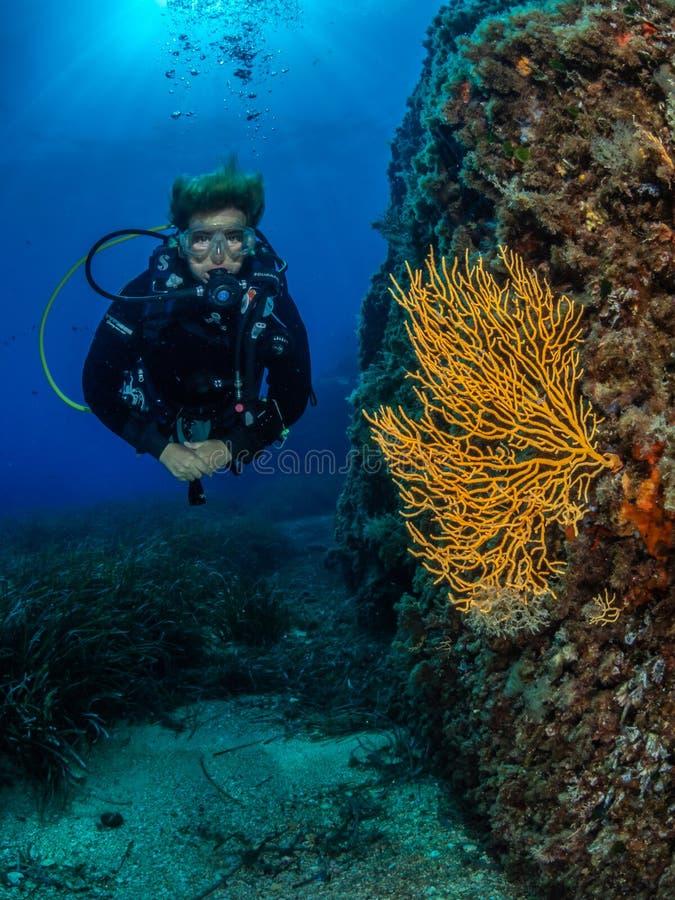 Kvinnlig dykare och gult gorgonian, Formiche rev arkivbild