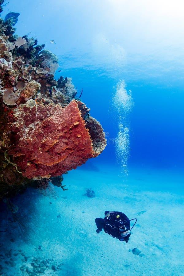 Kvinnlig dykare och svamp arkivfoton