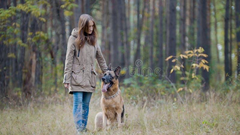 Kvinnlig för blont hår som spelar med hennes husdjur - tysk herde - som går på en höstskog arkivbilder