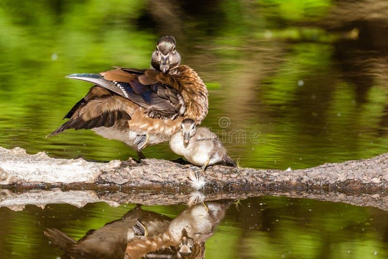 Kvinnlig grå färg-brunt wood and på sjön på sommar royaltyfria bilder