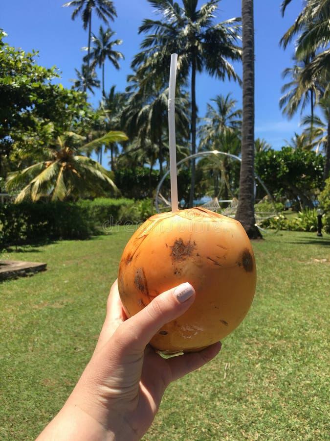 Kvinnlig hand med kokosnöten arkivfoto