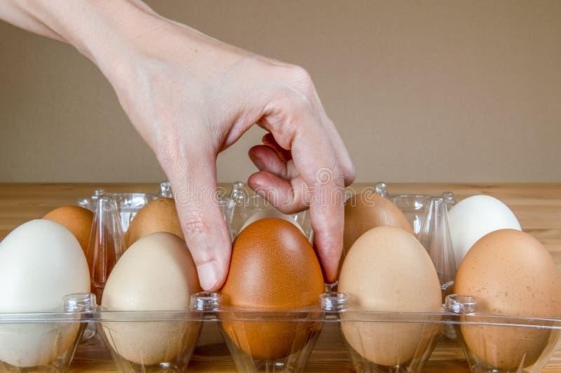 Kvinnlig hand som väljer ett ägg från den plast- äggasken på tabellen arkivfoto