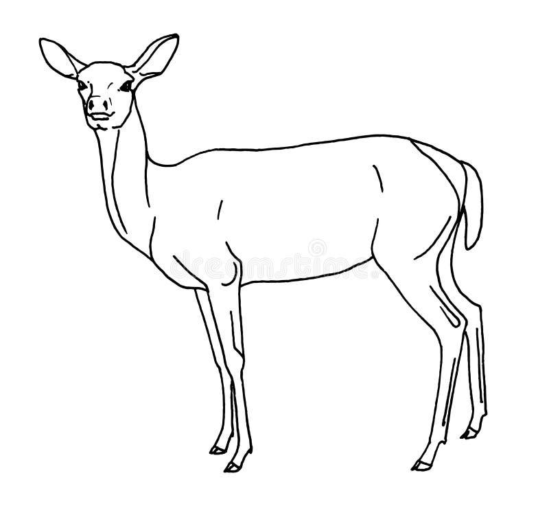 Kvinnlig kontur för hjortar vektor illustrationer