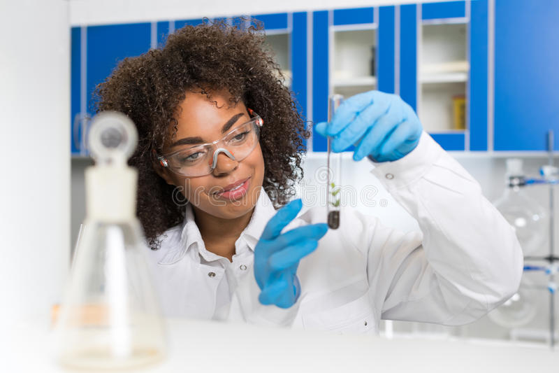 Kvinnlig laboratoriumforskare Examining Plant Sample i provröret, arbete i genetiklabb royaltyfri fotografi