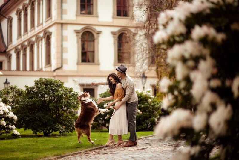Kvinnlig- och manpar har att gå utomhus- med deras favorit- hund, utbildar den, promenaden i öppen luft över den gröna banan och fotografering för bildbyråer