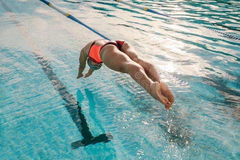 Kvinnlig simmaredykning in i simbassäng för inomhus sportar royaltyfri foto