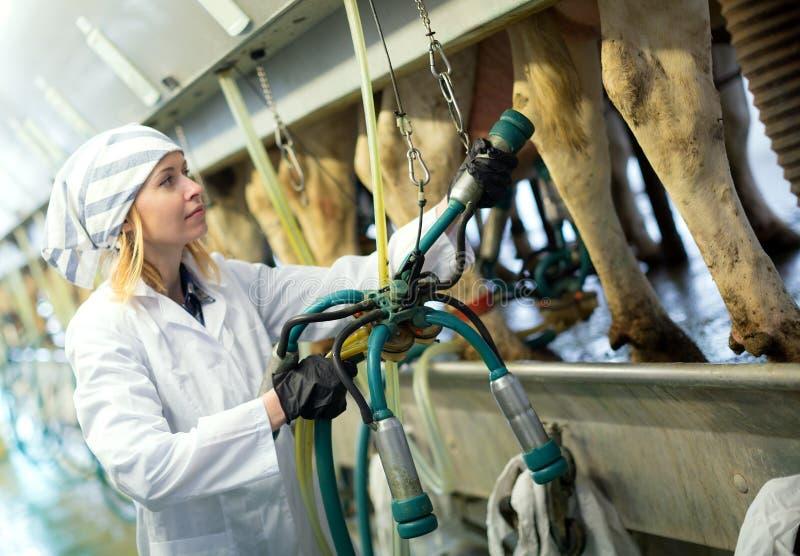 Kvinnlig tekniker som arbetar med att mjölka maskiner fotografering för bildbyråer