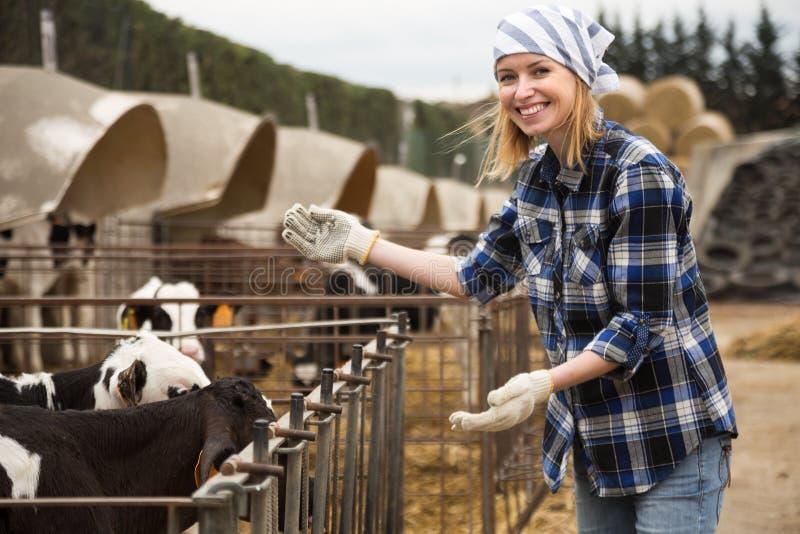 Kvinnlig tekniker som arbetar med mjölkkor i hushåll utomhus royaltyfri bild