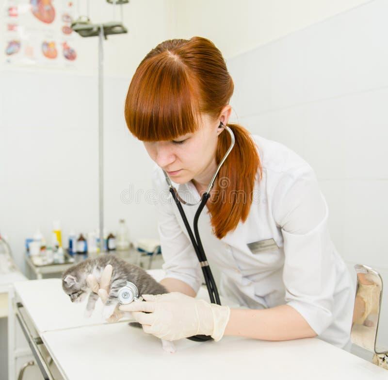 Kvinnlig veterinär som undersöker en kattunge med stetoskopet i cliniс royaltyfria foton