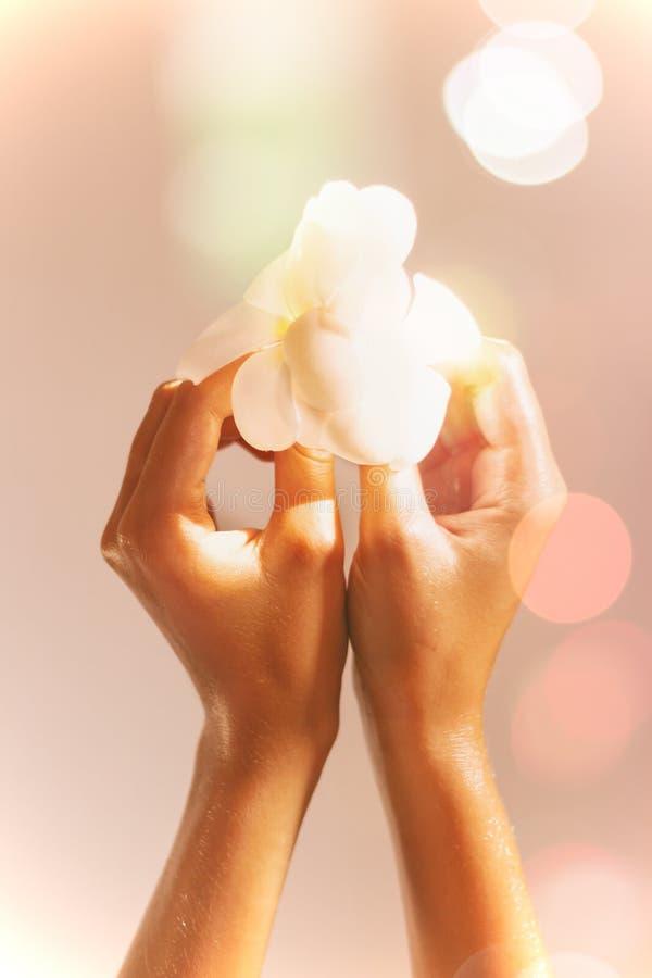 Kvinnliga händer i olje- hållande magnolia blommar på blured bakgrund med signalljus royaltyfri bild