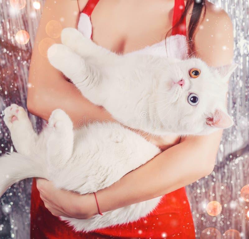 Kvinnliga händer som rymmer den vita snöig katten Jultomtendräkt lampor för bild för bakgrundskulajul defocused royaltyfri bild