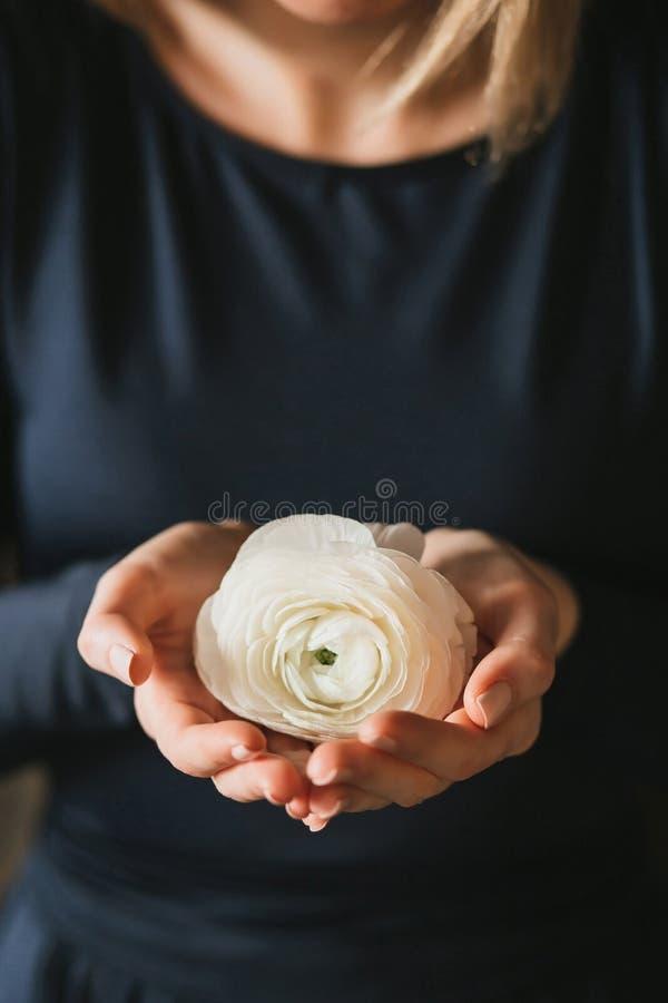 Kvinnliga händer som rymmer en vit ranunculusblomma royaltyfria bilder