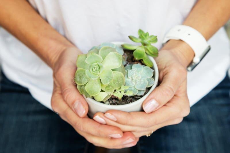 Kvinnliga händer som rymmer krukan med suckulenta växter royaltyfri bild