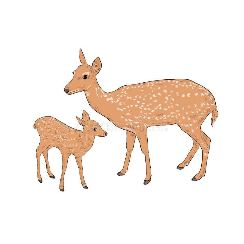 Kvinnliga hjortar med en lisma stock illustrationer