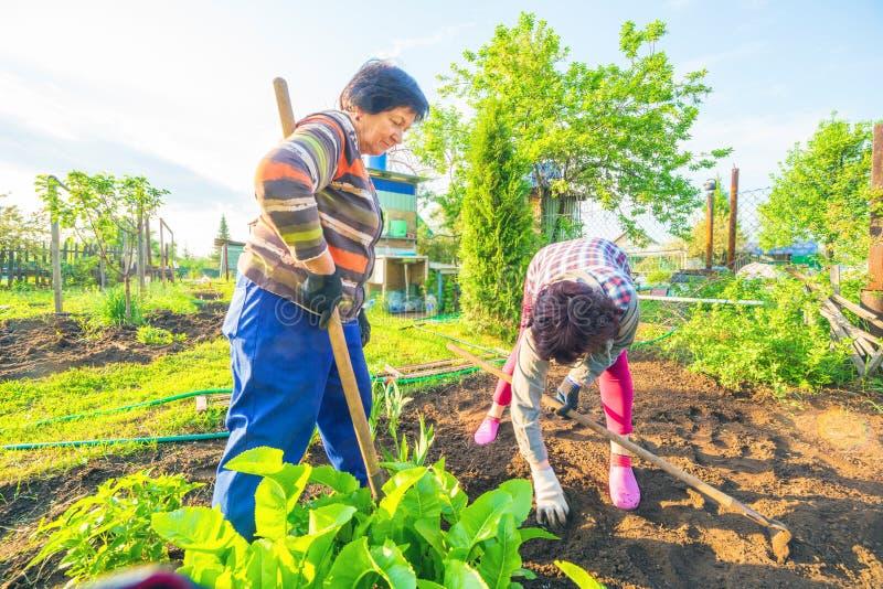Kvinnliga mödrar i trädgården royaltyfria bilder