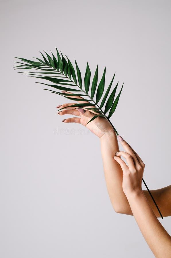 Kvinnliga sinnliga händer som rymmer en palmblad på en vit bakgrund royaltyfri bild