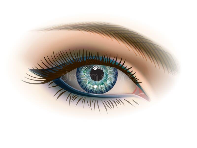 Kvinnliggrå färgöga med makeup vektor illustrationer