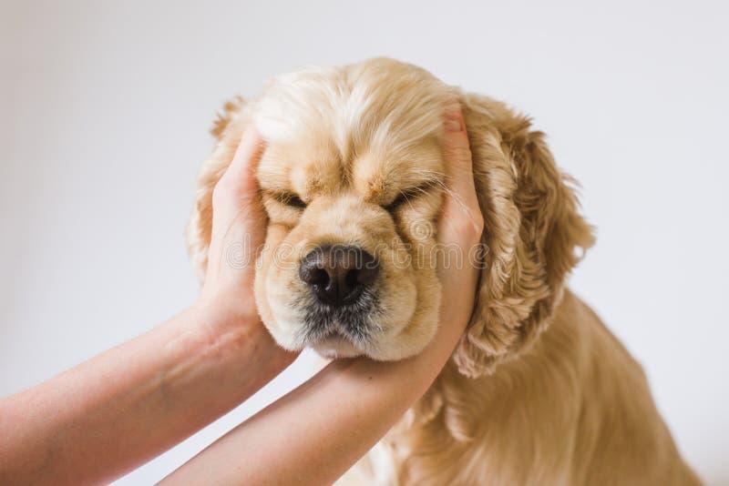 Kvinnlighänder som slår hunden royaltyfria bilder
