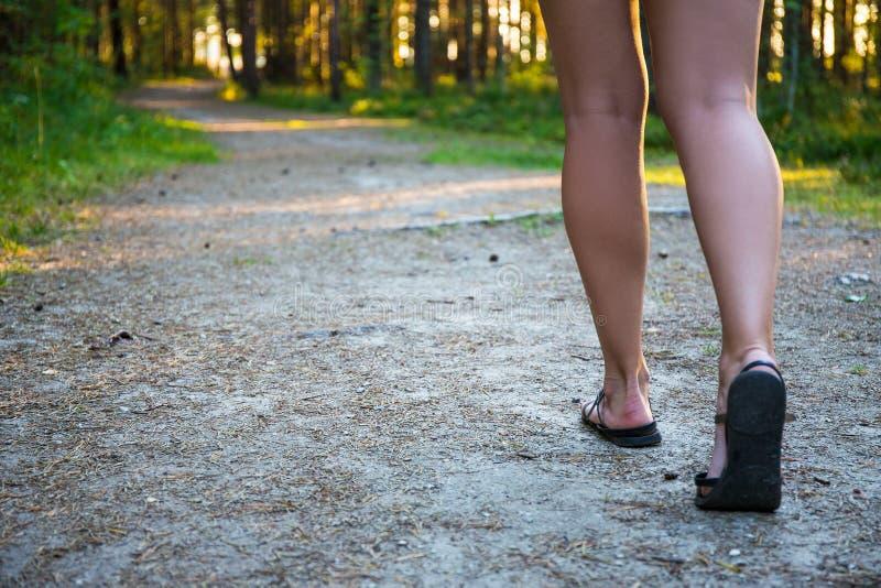 Kvinnlign lägger benen på ryggen i sandaler som går på skogvägen royaltyfria bilder
