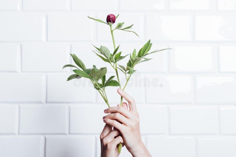 Kvinnlign räcker att rymma en blommapion arkivfoto
