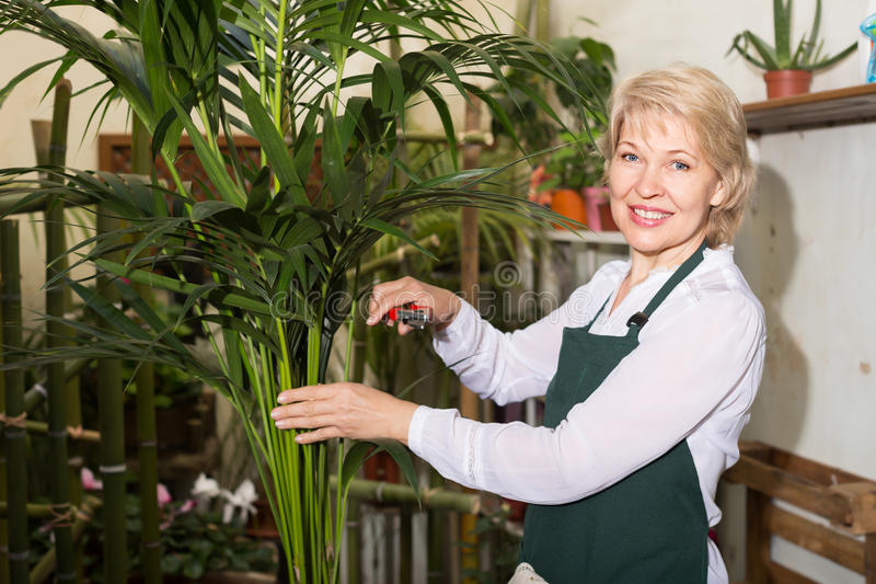Kvinnligt blomsterhandlareanseende bland växter royaltyfri bild