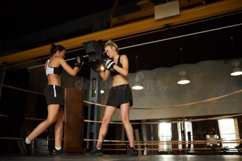 Kvinnligt slåss för boxare royaltyfria bilder